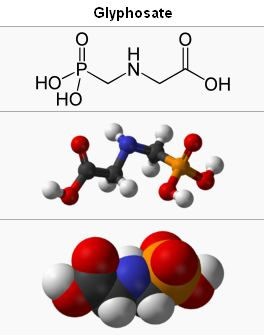 Glyphosate - Bildquelle: Screenshot-Ausschnitt Wikipedia/Glyphosate