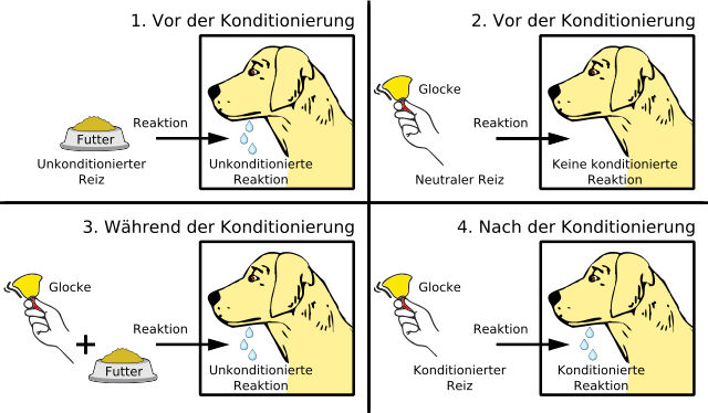 Pawlowsche Hund - Bildquelle: Wikipedia / Rhcastilhos, Vincent Danet, MagentaGreen; Creative Commons Attribution-Share Alike 3.0 Unported