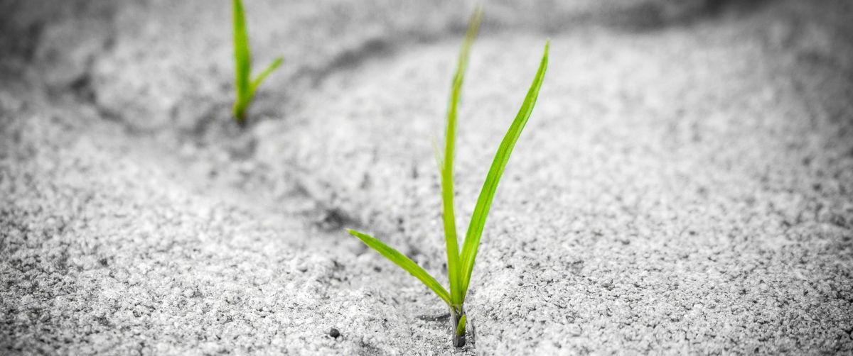 Resilienz - Bildquelle: Pixabay / TambiraPhotography; CC0 Creative Commons